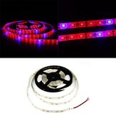 1M 2M 3M 4M 5M 3: 1 5050 SMD LED Wodoodporna Hydroponic Plant Grow Strip Light DC12V