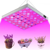 45W 144 LED Planta Grow Light Lámpara Spectrum completo para invernaderos de semillas de flores de interior
