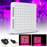 300W LED Grow Light Hydroponic Full Spectrum para flores vegetales interior Planta Semillas
