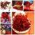 Egrow 1000 Unidades / pacote Açafrão sementes Ao Ar Livre Flor Bonsai Irã Açafrão Em Vasos Planta Para Casa Jardim Plantaing